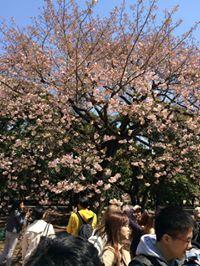 English Teacher JAPAN 英会話マンツーマンレッスンJ.S.先生の英会話マンツーマン情報